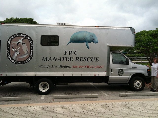 Manatee News Blog 11 7 2014