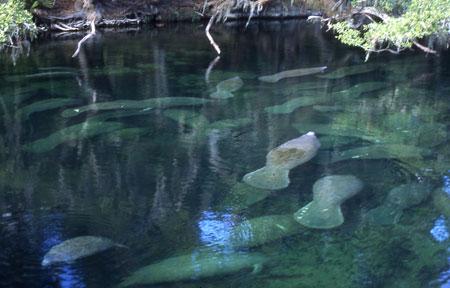 blue-spring-state-park-12-8-2016