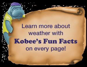Manatee Fun Facts